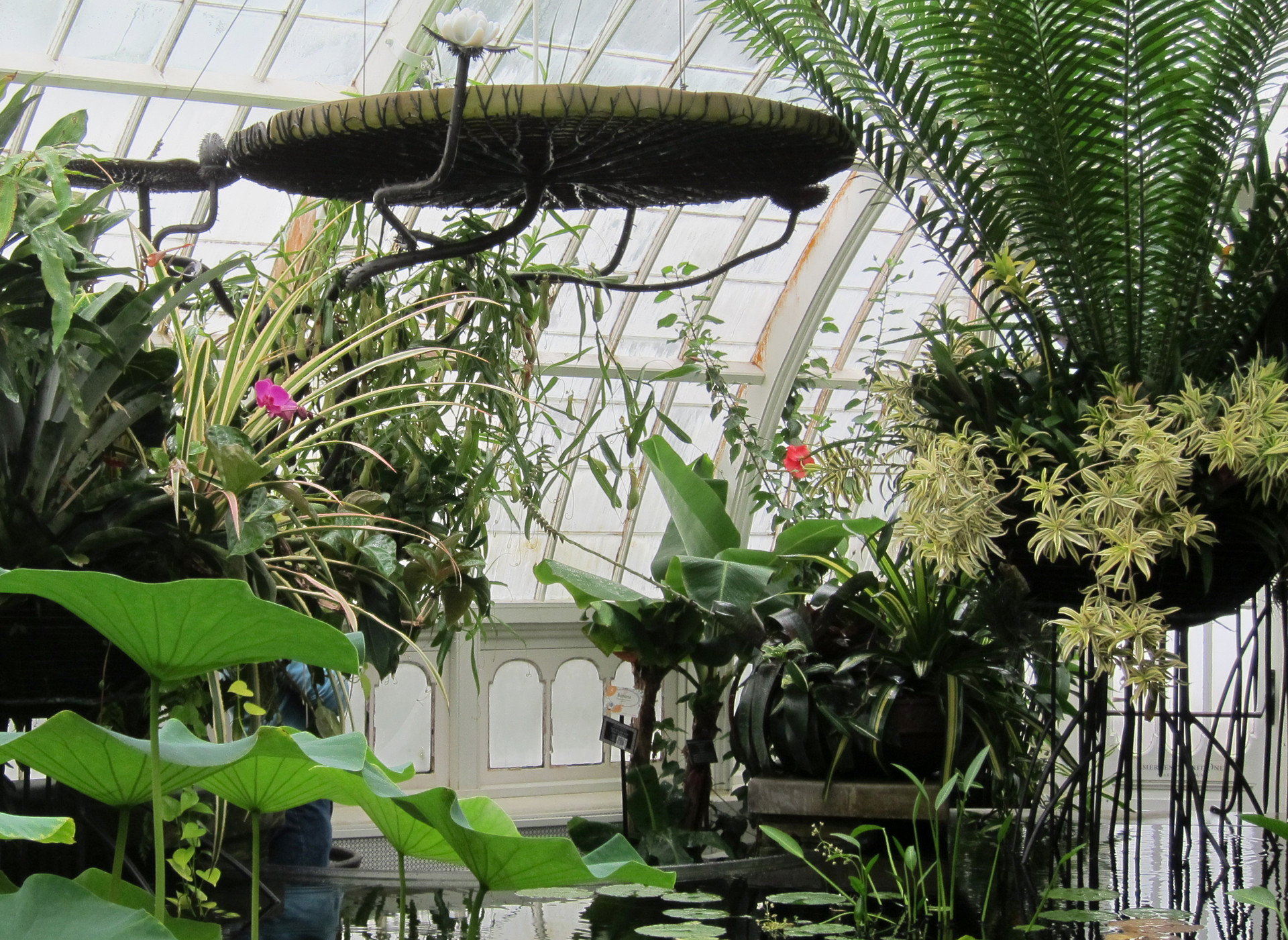 The Conservatory of Flowers, San Francisco, California