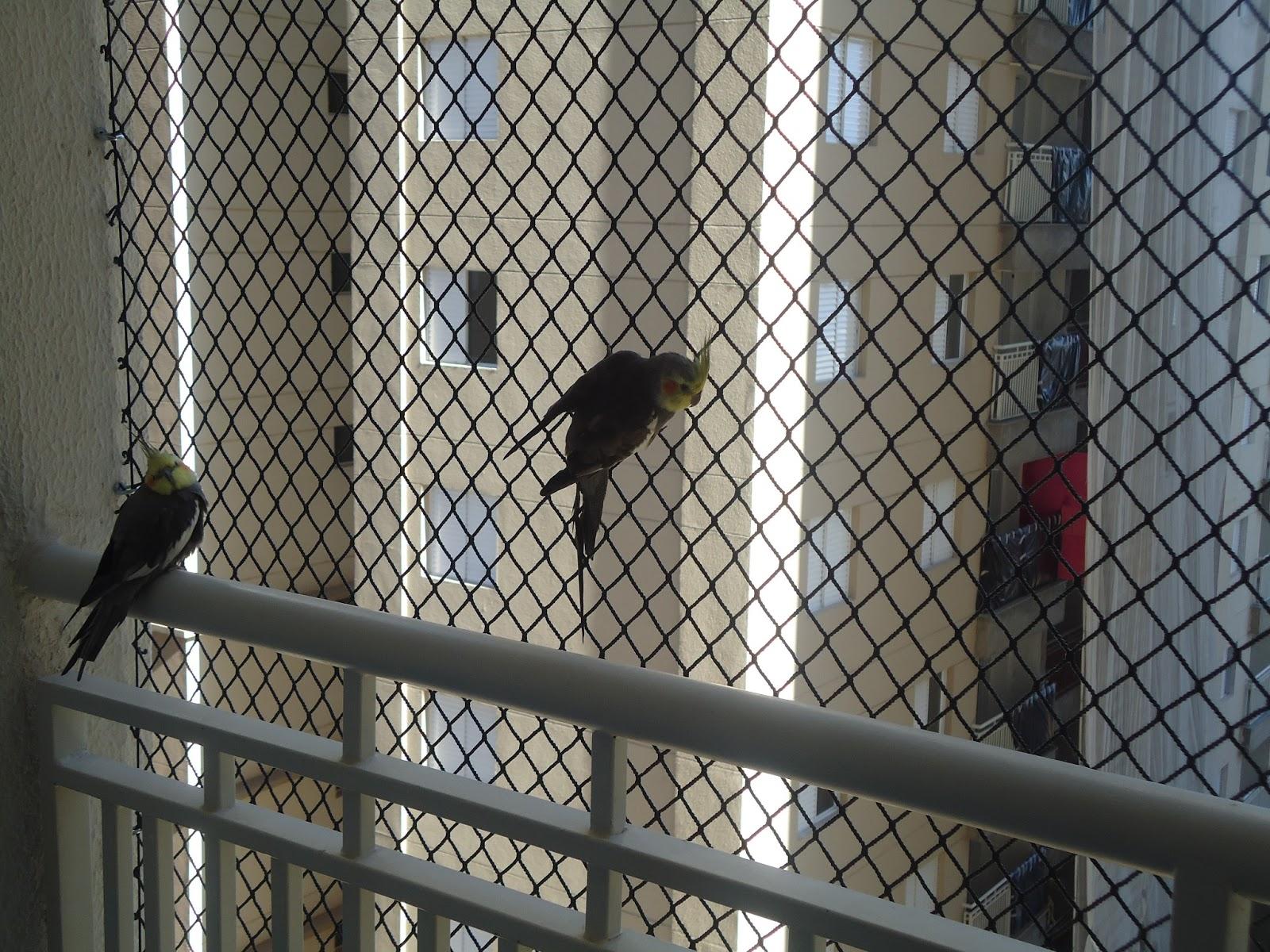 Rede de proteção para Aves