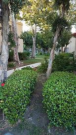 QC Walkway1.jpg