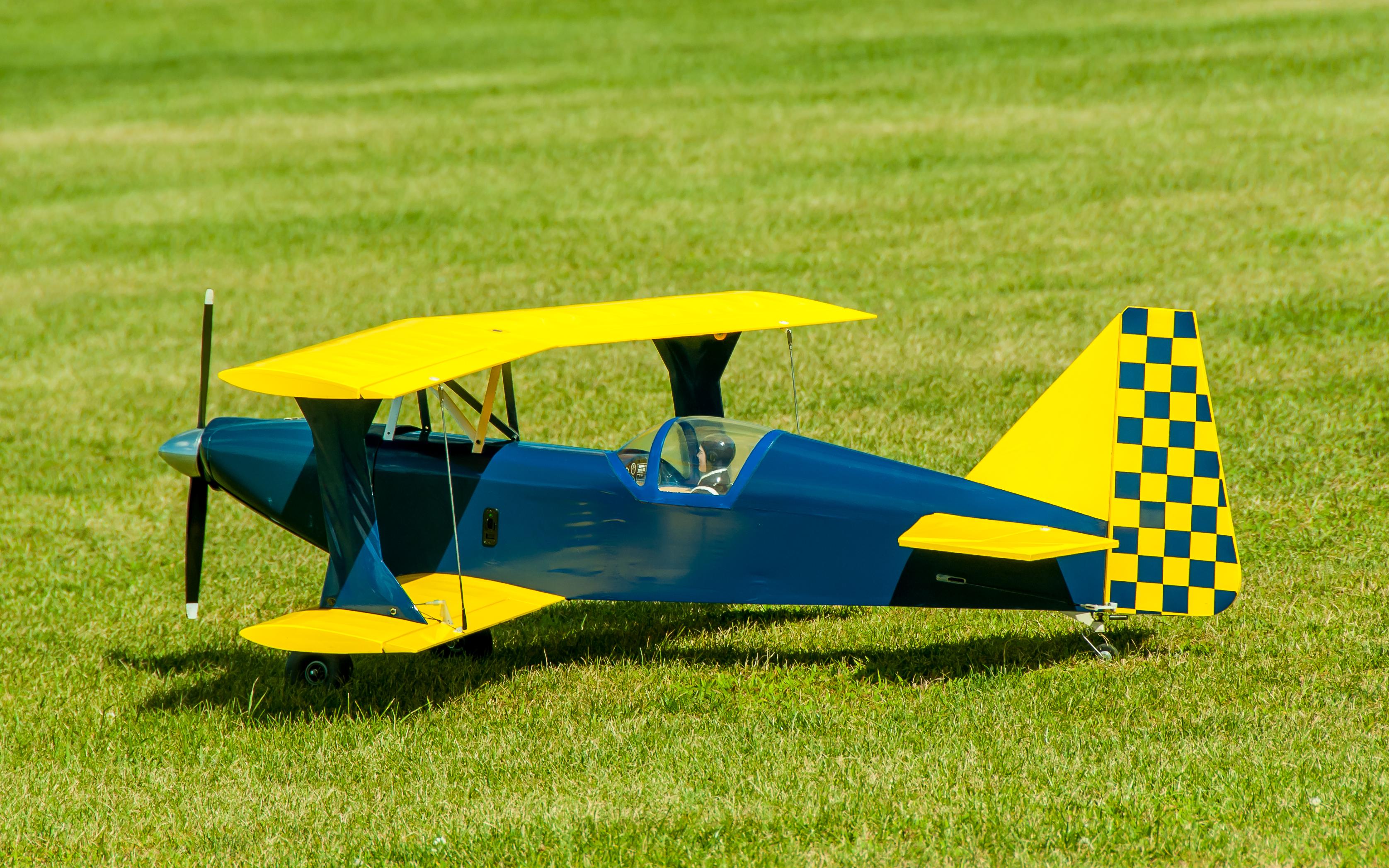 # - 270 - Dark Blue & Yellow, Checkered Tail