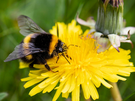 Pollinator Plans Roll Out for Carrigaline & Kinsale