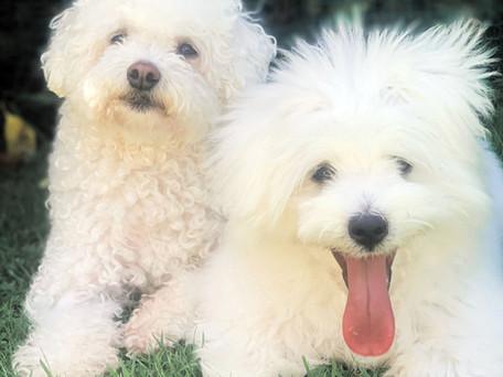Pet Of The Week- Lacey & Zelda
