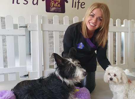 Dotey Pets Launches On Maryborough Hill