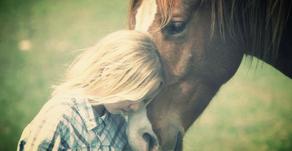 Soleil Levant: article sur la Communication animale
