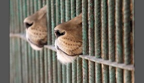 Zoos, Cirques, Parcs