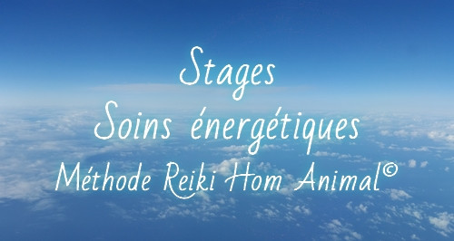 stages soins.jpg