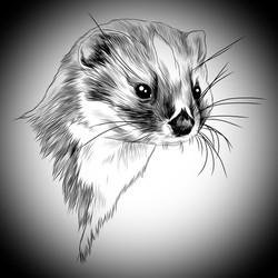 Walinska the weasel