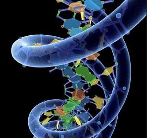 Factores Biológicos y Genéticos