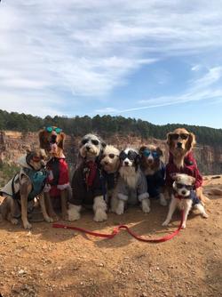 Dog walk shades