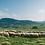 """Thumbnail: 羊乳チーズ ペコリーノ サルド ドルチェ Pecorino Sardo Dolce DOP """"Pinna""""  200g"""