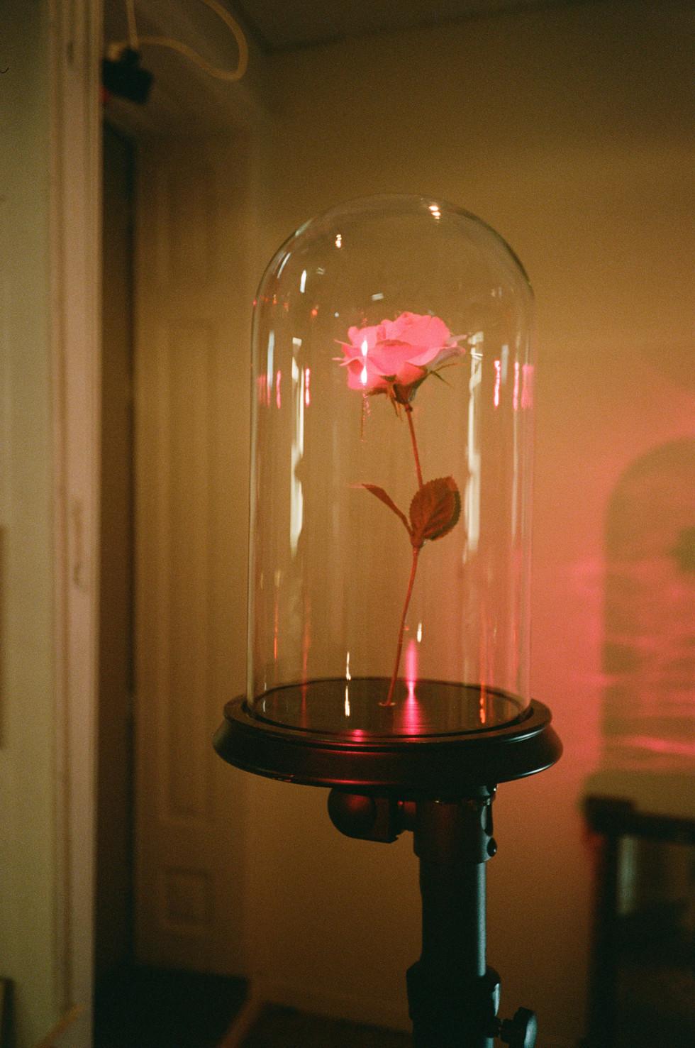 rose-web.jpg