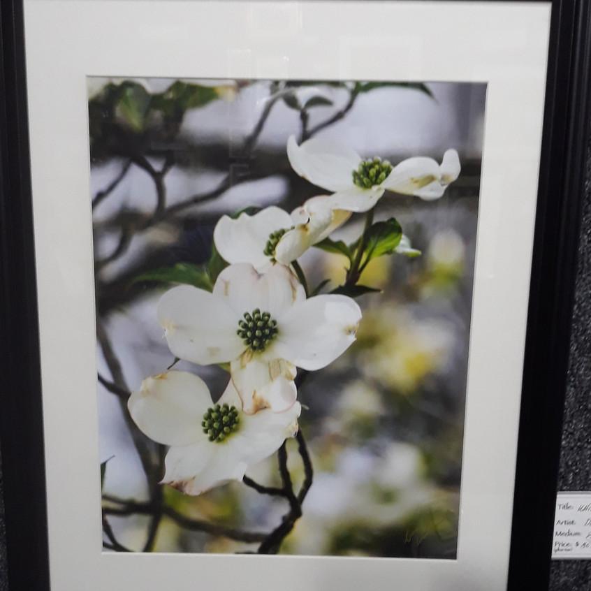 Don Haberman - Dogwood blossoms