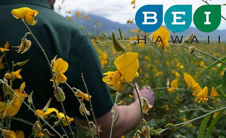 Flowers1wx.jpg