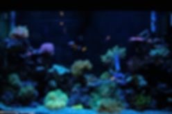 110 Gallon Saltwater Reef Aquarium