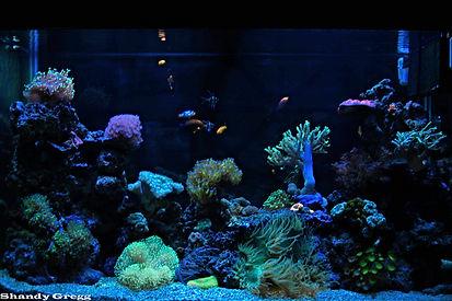 110 Gallon Saltwater Reef Aquarium