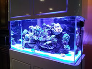 90 Gallon Custom Reef Installation