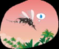 mosquito vector aedes aegypti