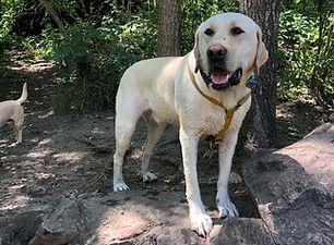 Doggy Playdates - Moose hiking.jpg