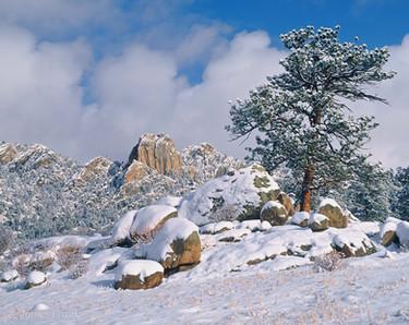 Winter's Surprise at MacGregor Ranch