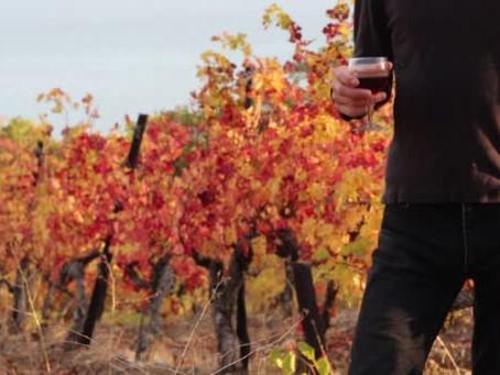 Sugestões de vinhos para o outono