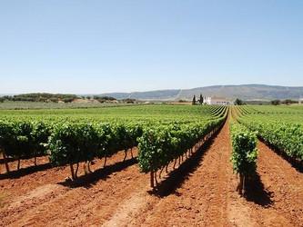 Degustação Anual dos Vinhos do Alentejo