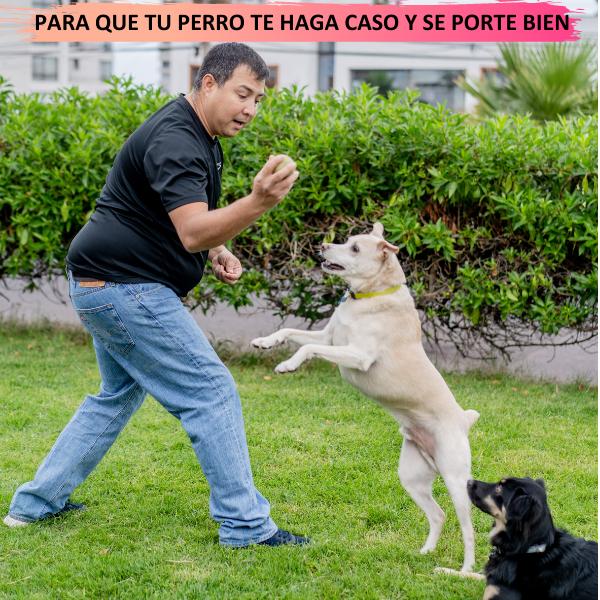 portada_hotmart.png