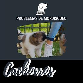portada_problemas_de_mordisqueo.png