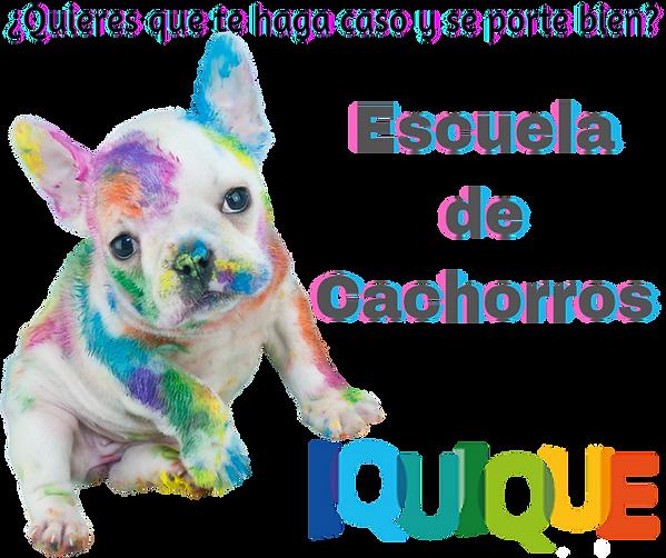 escuela_de_cacchorros.png