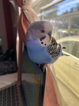BirdieBirdie.jpg