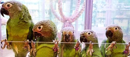ALL PETS CLUB Amazon Birds.jpg