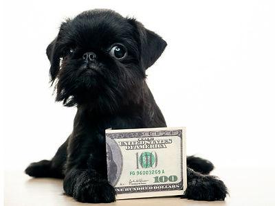 allpetsclub-pet-financing.jpg