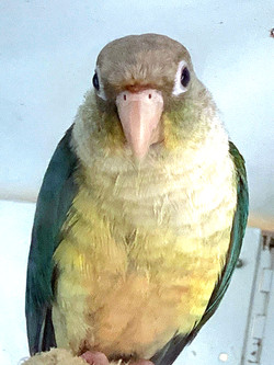 Various Parrots