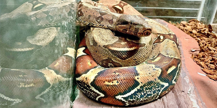 allpetsclub-reptiles.jpg