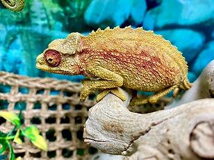 allpetsclub-reptiles-amphibians.jpg