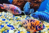 fishyjuly10.jpg