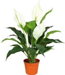 Artifical Plants for Offices Funky Yukka (16)