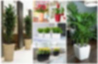 Office Plants London