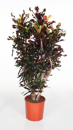 Unique Foliage