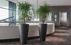 Twin Planters