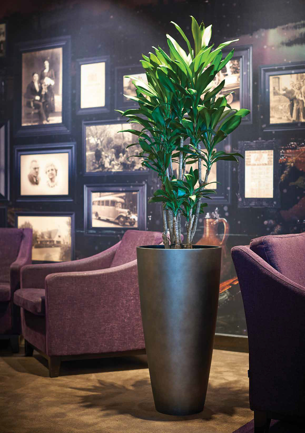 Plants for Reception Areas (18)
