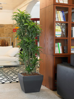 Office Plants Interior Plant Displays (2)