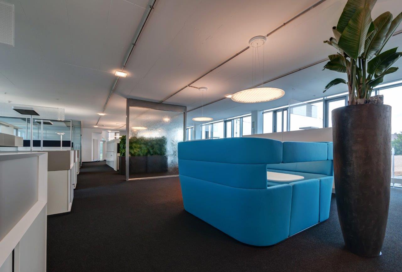Funky Yukka Office Plants Rental (10)