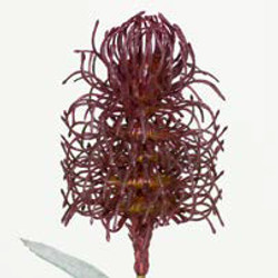 Artifical Plants for Offices Funky Yukka (99)