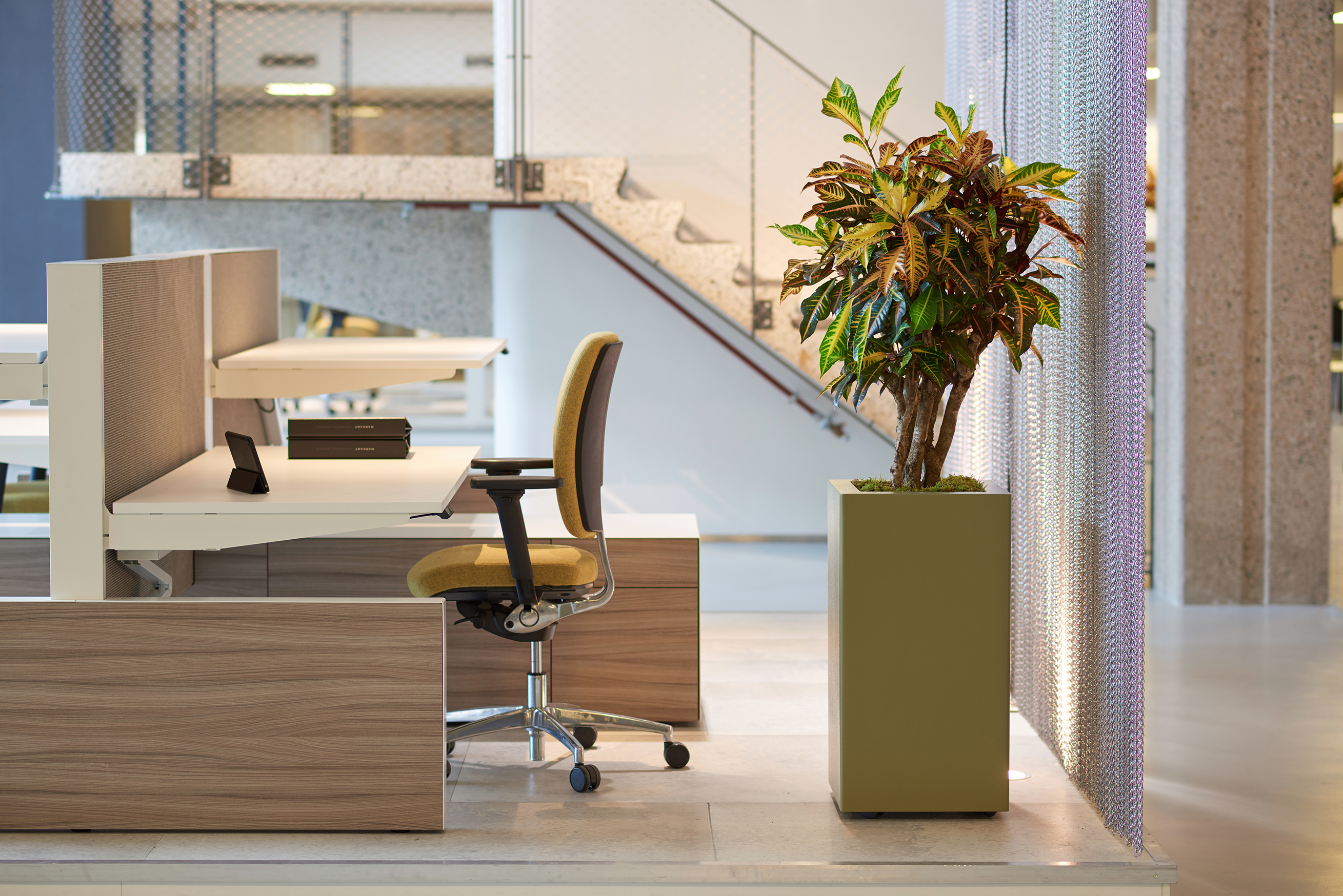 Freestanding Feature Plant