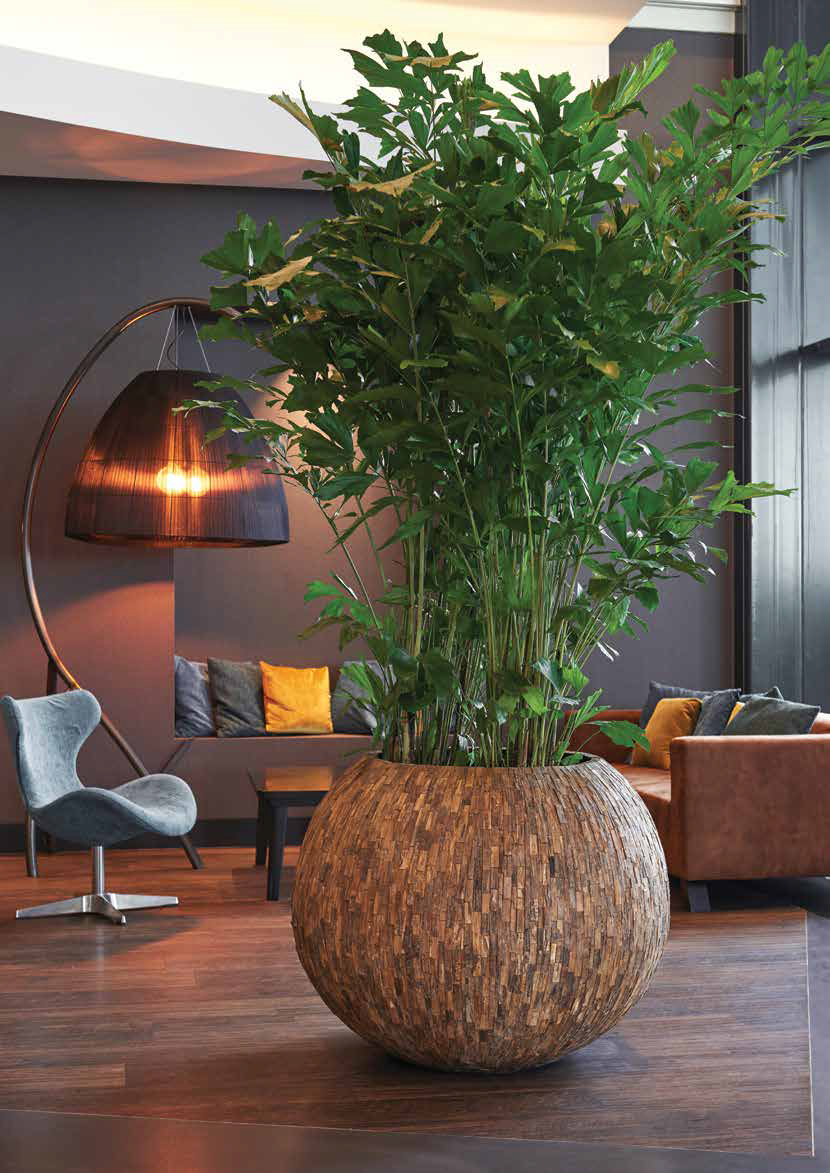 Plants for Reception Areas