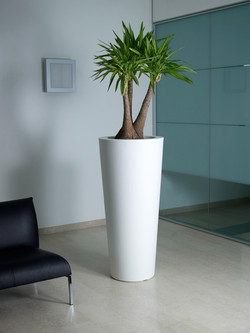 Office Plants Interior Plant Displays (7)