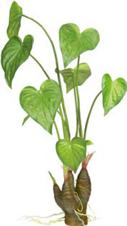 Artifical Plants for Offices Funky Yukka (95)