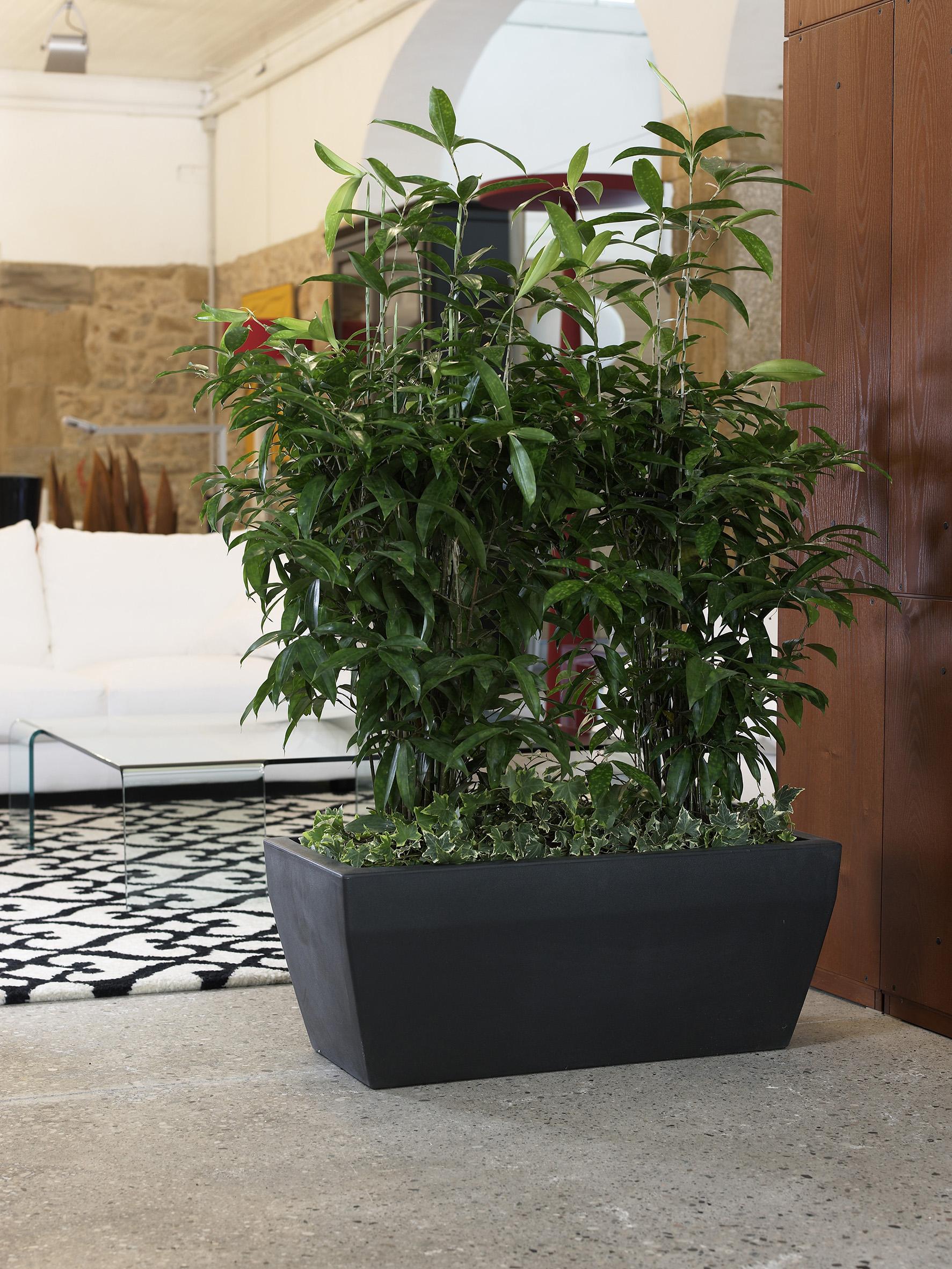 Office Plants Interior Plant Displays (1)