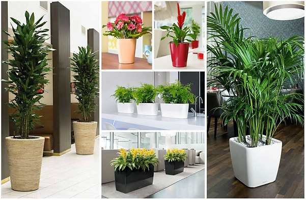 Office Plants and Containers