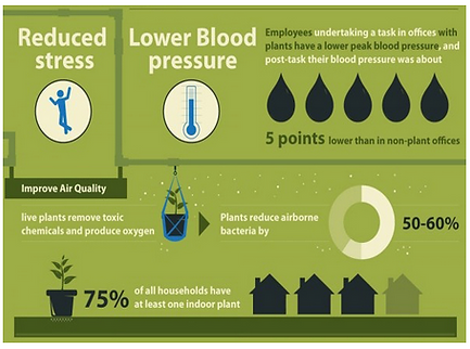 Office Plants Health Benefits